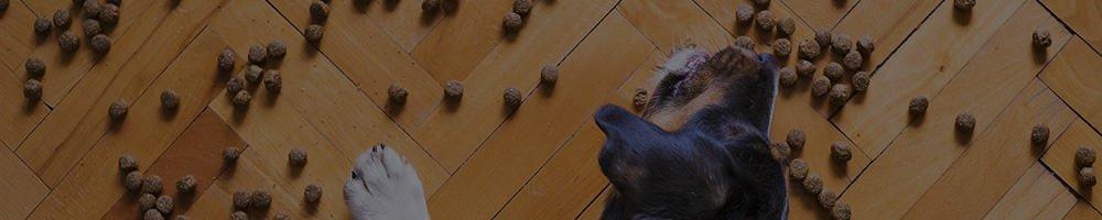 Bästa Hundmat & foder 2021